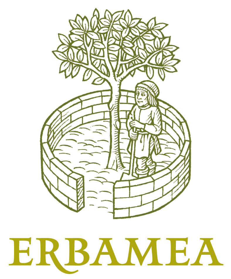 Erbamea