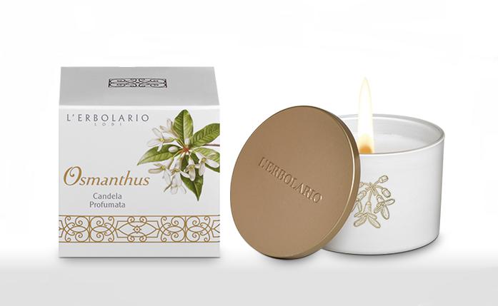 osmathus-candela-profumata